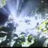 אור- בין עצים