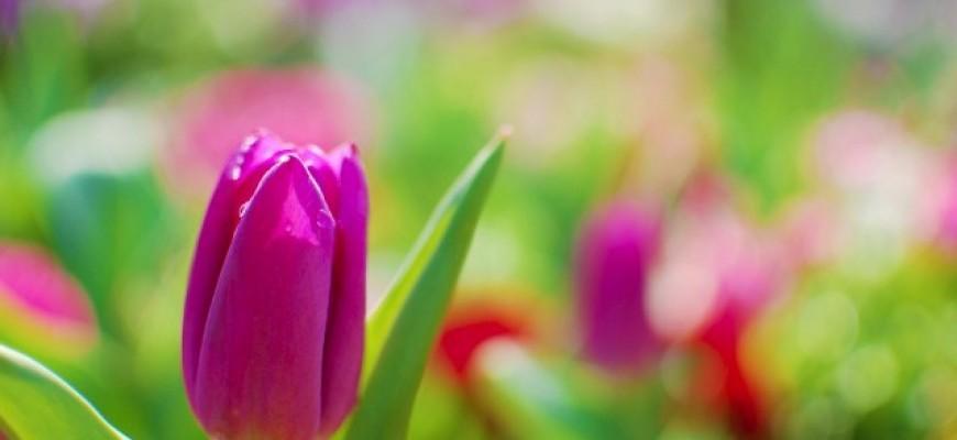 צניעות- תפילה- פרח סגור